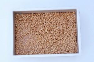 Rice krispies snack med smeltet yankie bar